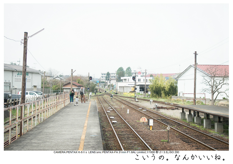 小湊鉄道_菜の花画像4.jpg