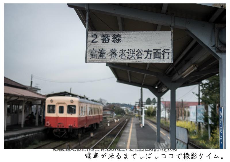 小湊鉄道_菜の花画像6.jpg