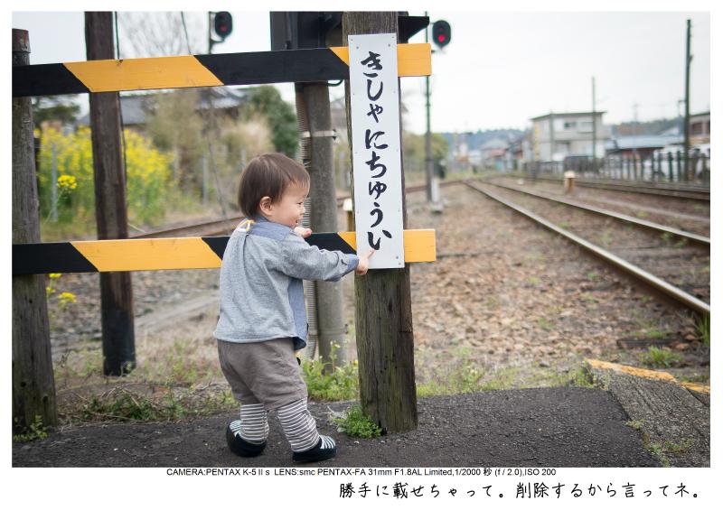 小湊鉄道_菜の花画像8.jpg