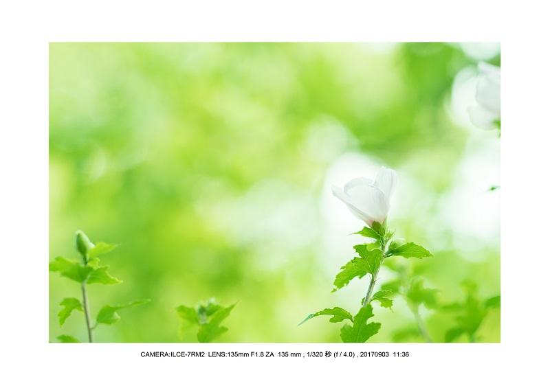 彼岸花見頃の大阪長居植物園9.jpg