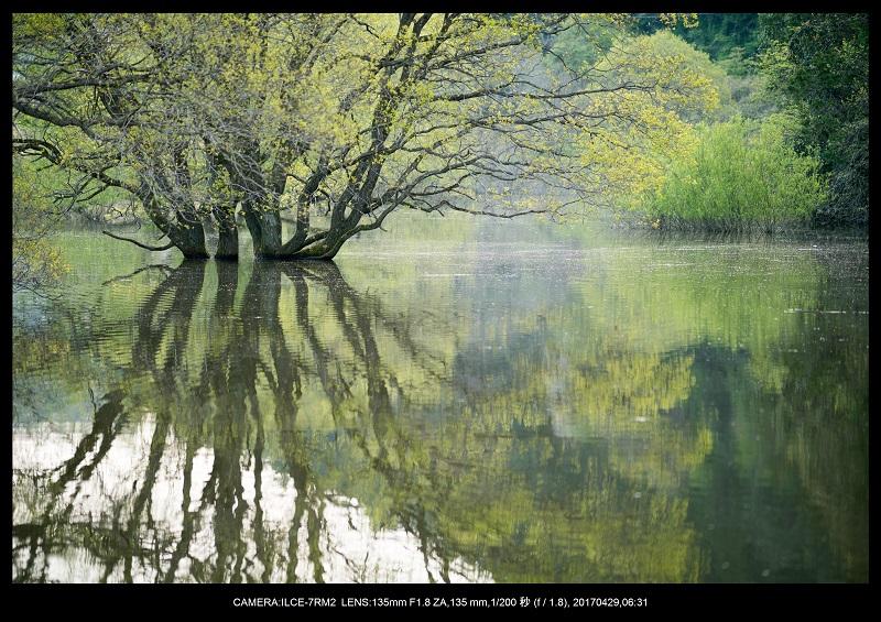 新緑の奈良・室生湖の鏡面シンメトリー13.jpg