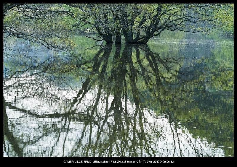 新緑の奈良・室生湖の鏡面シンメトリー15.jpg