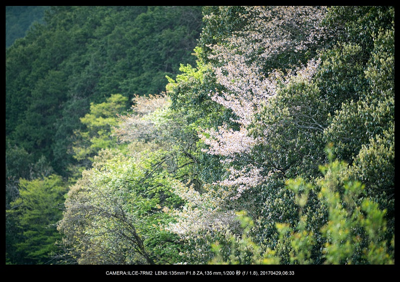 新緑の奈良・室生湖の鏡面シンメトリー16.jpg