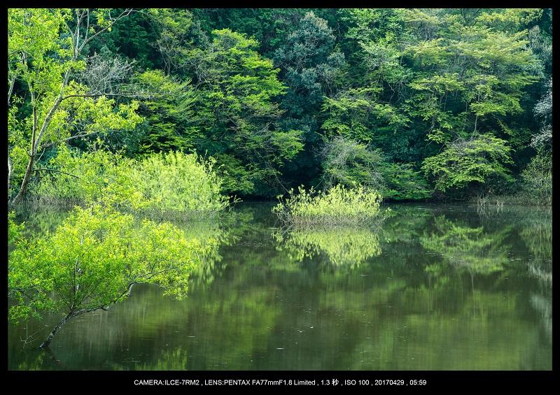 新緑の奈良・室生湖の鏡面シンメトリー5.jpg