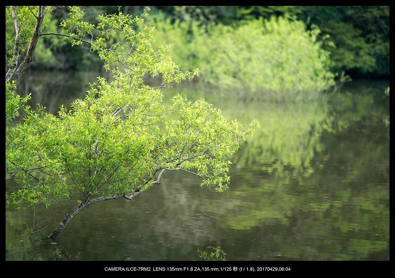 新緑の奈良・室生湖の鏡面シンメトリー6.jpg
