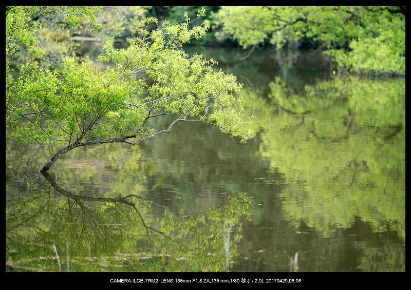 新緑の奈良・室生湖の鏡面シンメトリー8.jpg