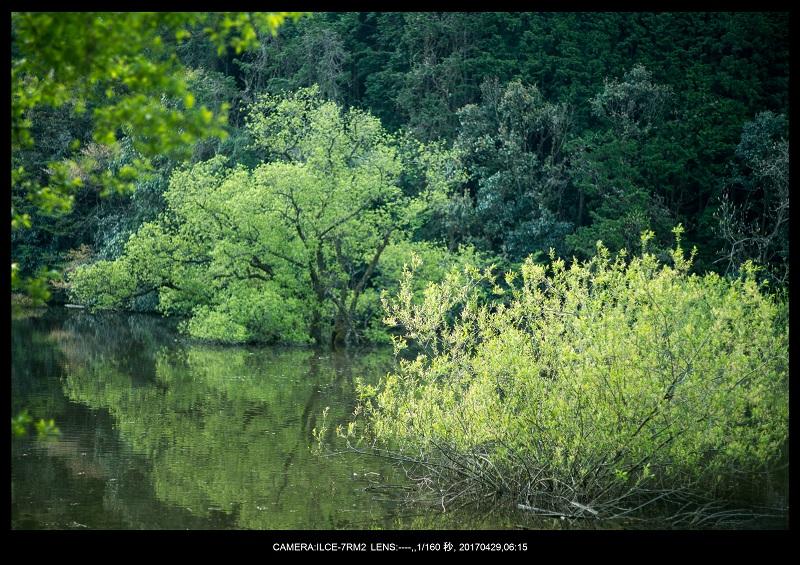 新緑の奈良・室生湖の鏡面シンメトリー9.jpg