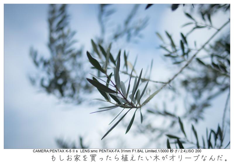 木場公園1.jpg