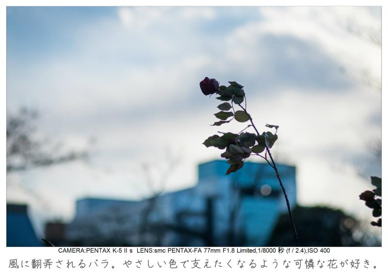 木場公園12.jpg