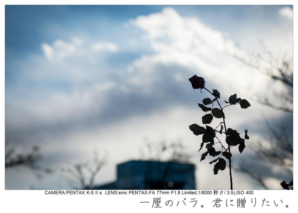 木場公園13.jpg