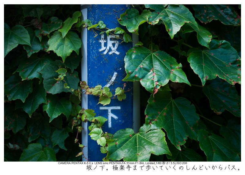 湘南散歩23.jpg