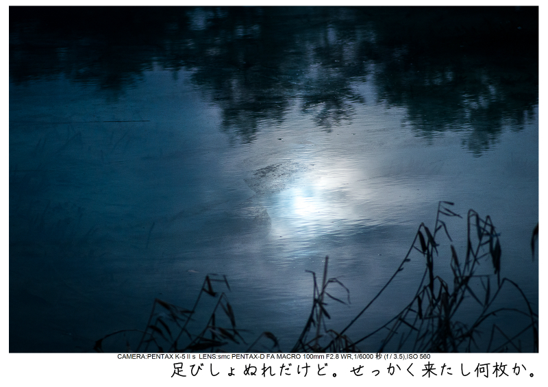 福島桜60裏磐梯.jpg