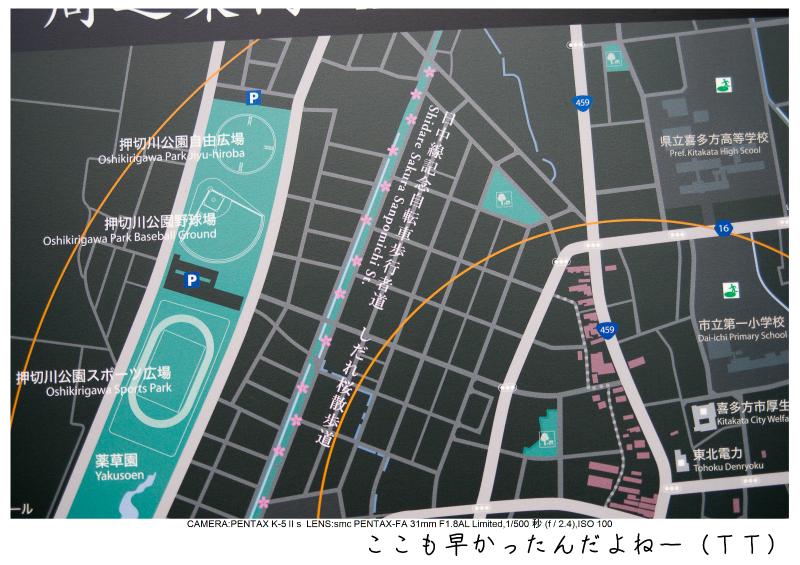 福島桜71裏磐梯.jpg