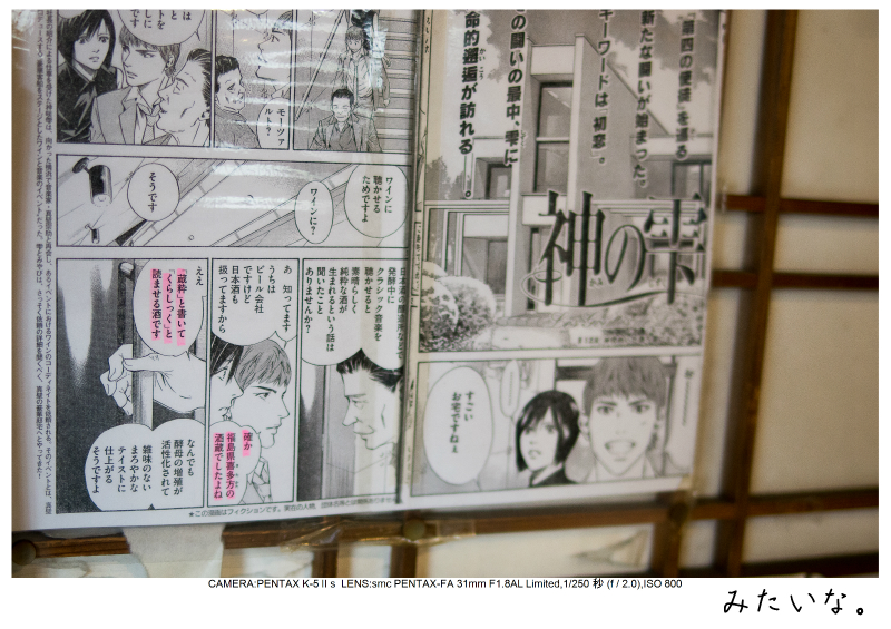 福島桜88裏磐梯.jpg