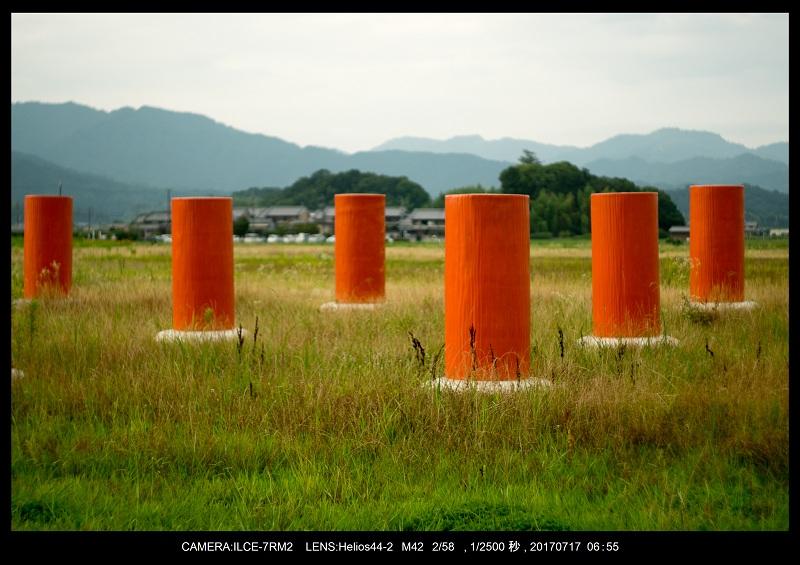 絶景・奈良の藤原宮跡の蓮ハス見ごろ見頃33.jpg