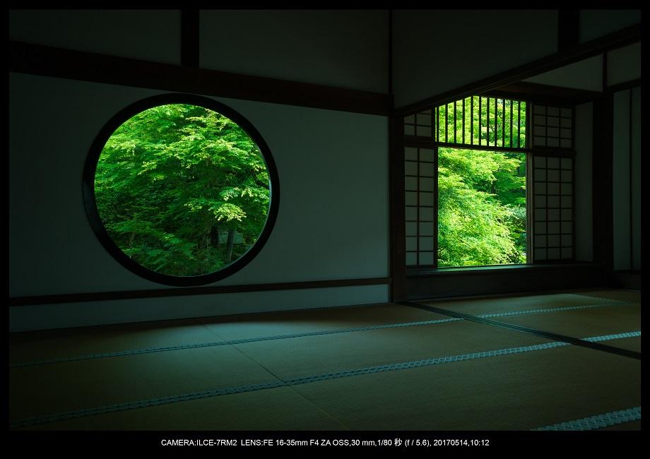 絶景京都・旅行記画像・春の新緑源光庵の丸窓5月0.jpg