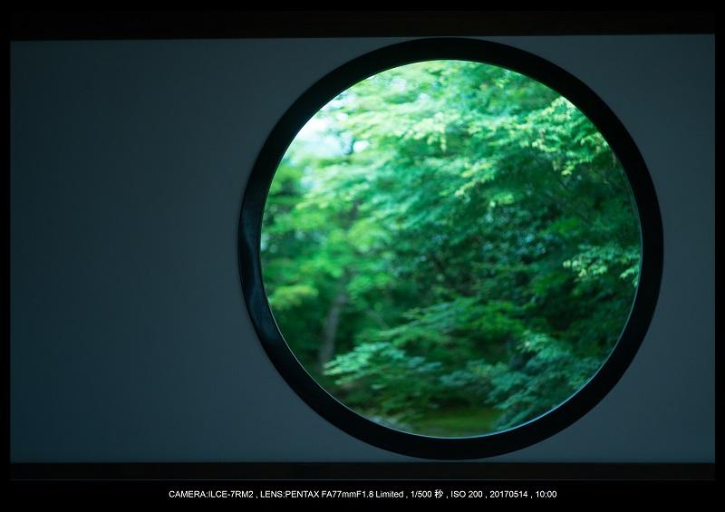絶景京都・旅行記画像・春の新緑源光庵の丸窓5月13.jpg