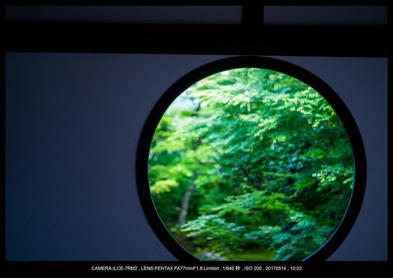 絶景京都・旅行記画像・春の新緑源光庵の丸窓5月14.jpg