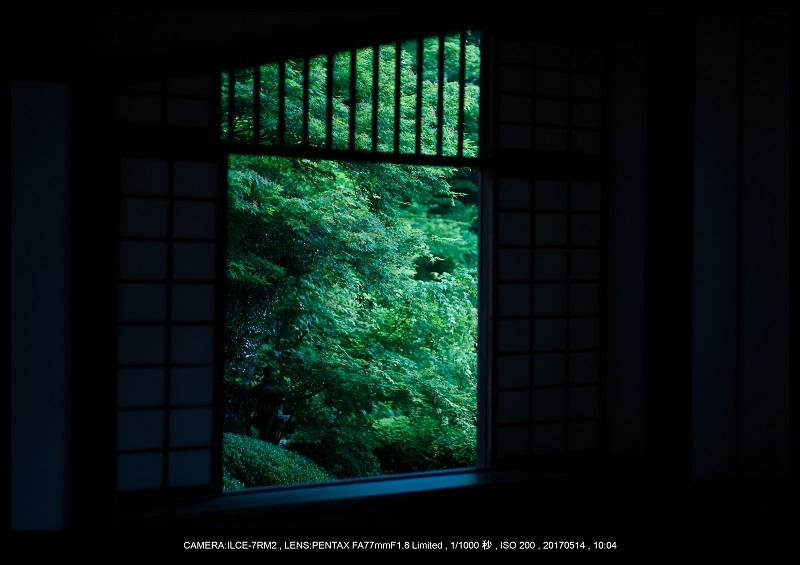 絶景京都・旅行記画像・春の新緑源光庵の丸窓5月15.jpg