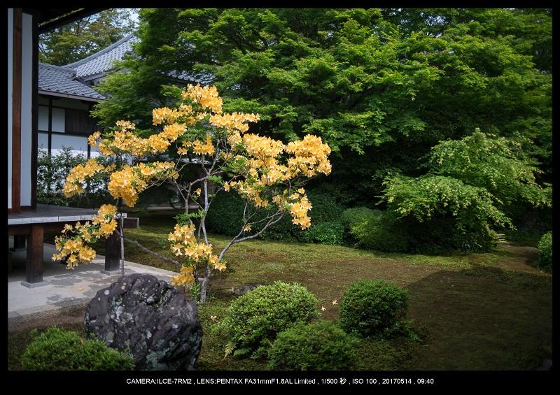 絶景京都・旅行記画像・春の新緑源光庵の丸窓5月3.jpg