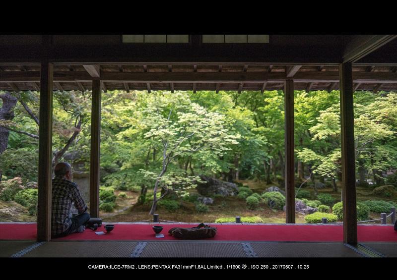 絶景京都・旅行記画像・春の新緑青もみじの圓光寺5月10.jpg