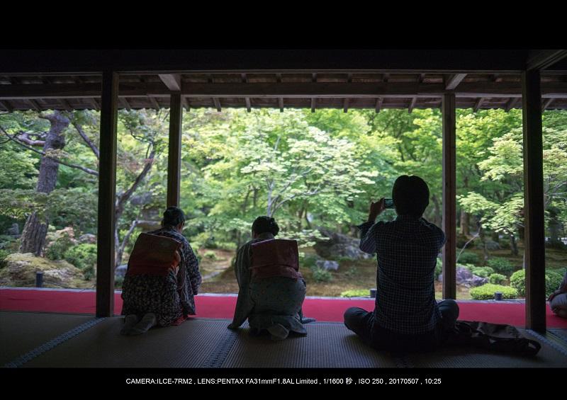 絶景京都・旅行記画像・春の新緑青もみじの圓光寺5月11.jpg