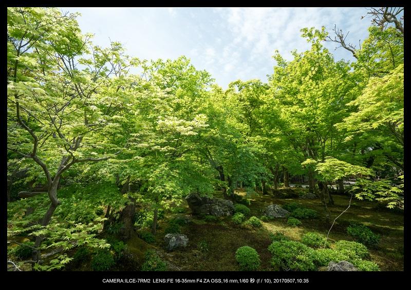 絶景京都・旅行記画像・春の新緑青もみじの圓光寺5月15.jpg
