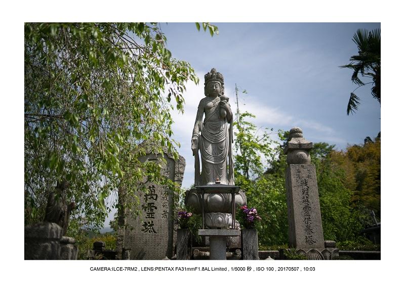 絶景京都・旅行記画像・春の新緑青もみじの圓光寺5月2.jpg