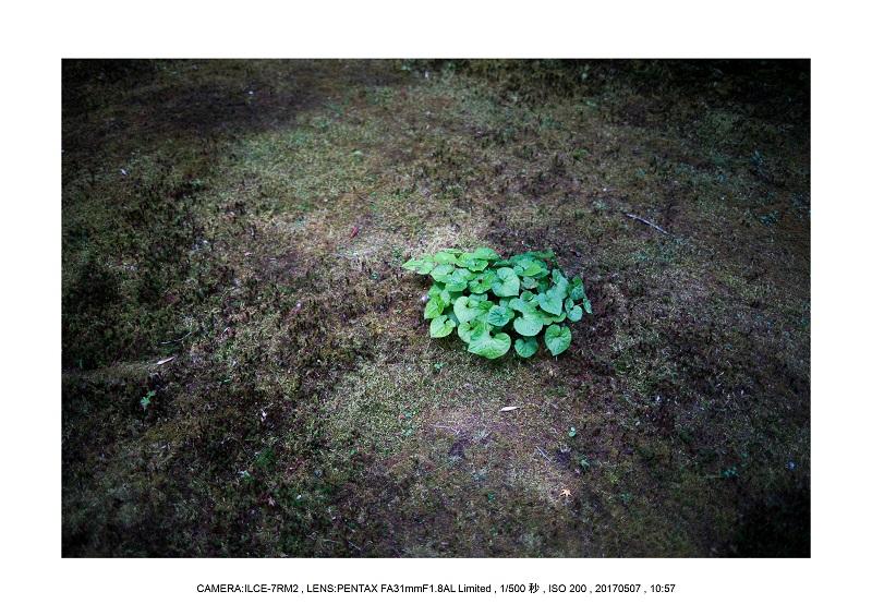 絶景京都・旅行記画像・春の新緑青もみじの圓光寺5月21.jpg