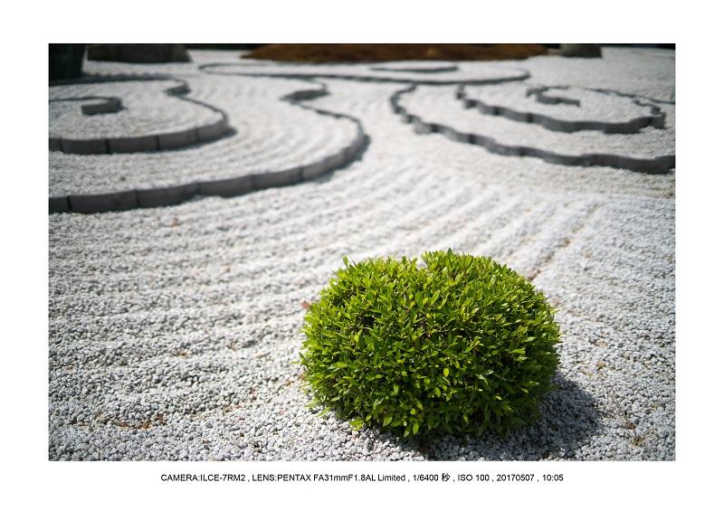 絶景京都・旅行記画像・春の新緑青もみじの圓光寺5月3.jpg