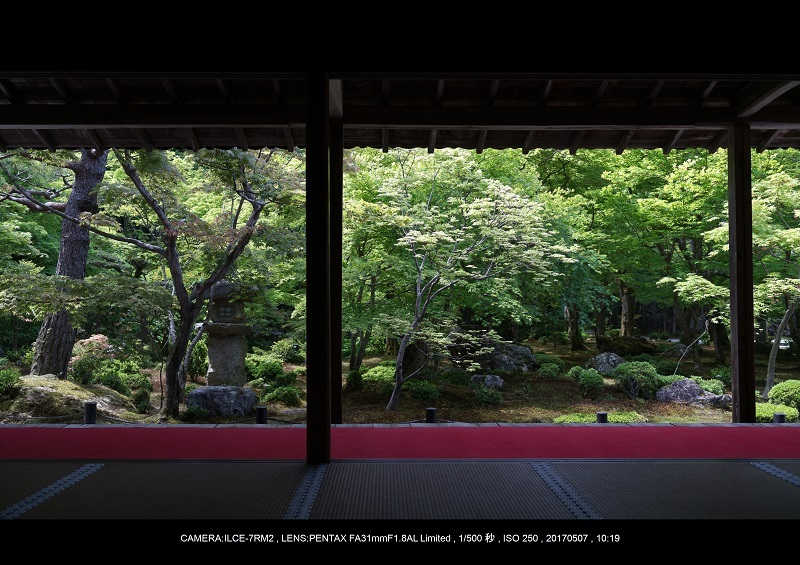 絶景京都・旅行記画像・春の新緑青もみじの圓光寺5月8.jpg