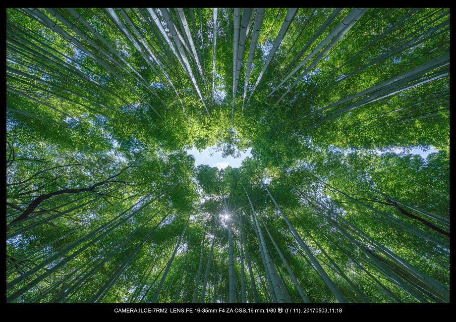 絶景京都・春の新緑青もみじの嵐山5月0.jpg