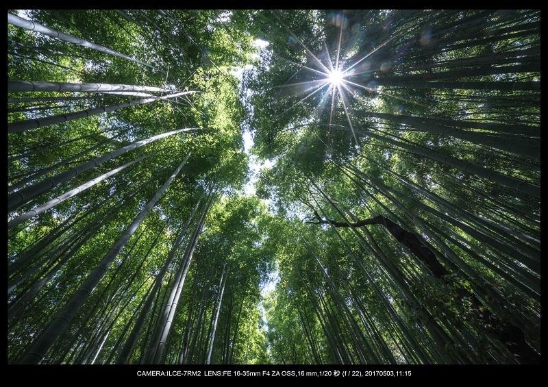 絶景京都・春の新緑青もみじの嵐山5月3.jpg