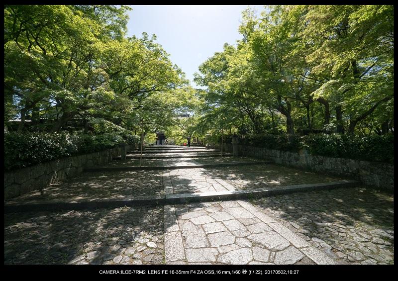 絶景京都・春の新緑青もみじの真如堂5月5.jpg