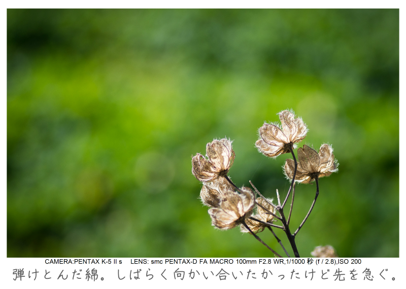 鋸南町の水仙14.jpg
