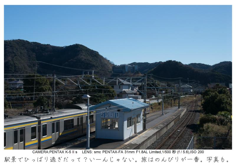 鋸南町の水仙7.jpg