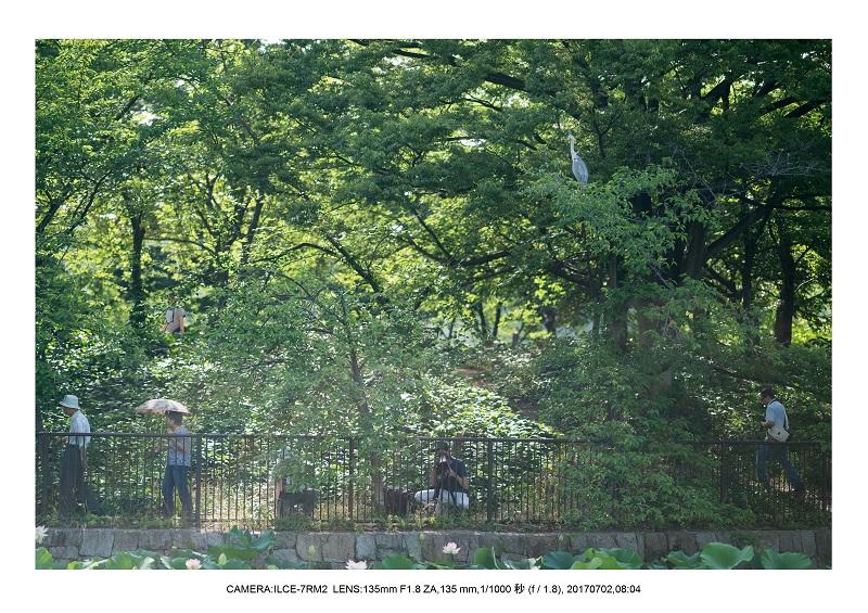 長居植物園でハス見頃4.jpg