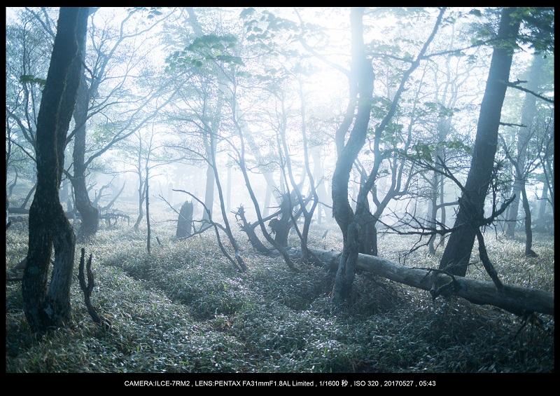 関西の星景スポット大台ケ原で星の風景撮影で天の川33.jpg