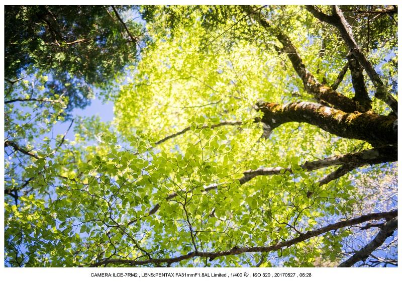 関西の星景スポット大台ケ原で星の風景撮影で天の川36.jpg