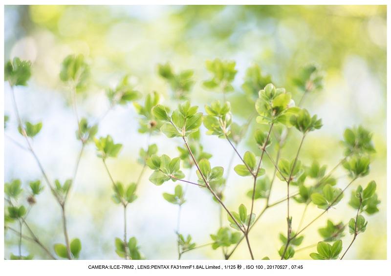関西の星景スポット大台ケ原で星の風景撮影で天の川46.jpg