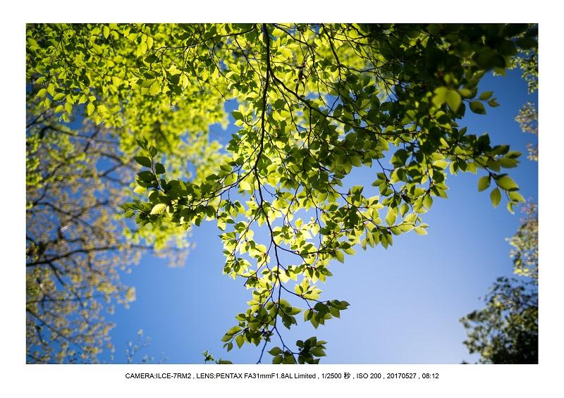 関西の星景スポット大台ケ原で星の風景撮影で天の川50.jpg