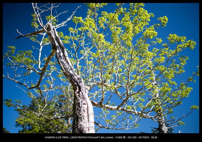 関西の星景スポット大台ケ原で星の風景撮影で天の川53.jpg