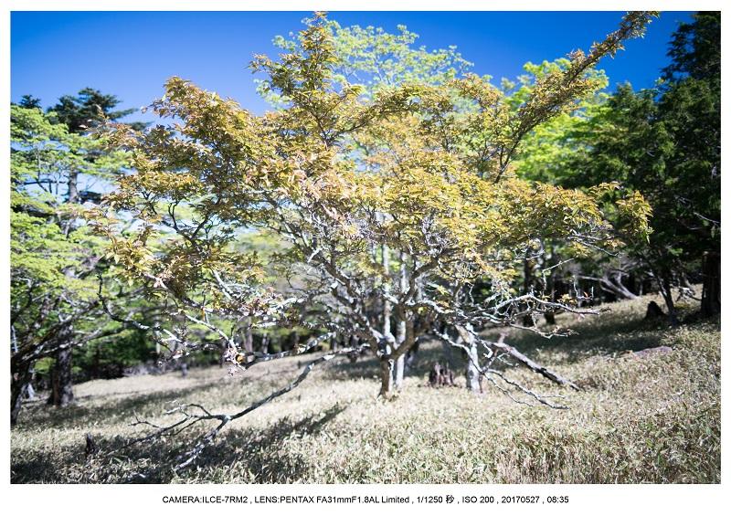 関西の星景スポット大台ケ原で星の風景撮影で天の川55.jpg