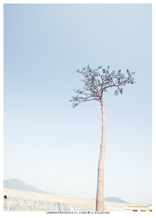 陸前高田奇跡の一本松13.jpg