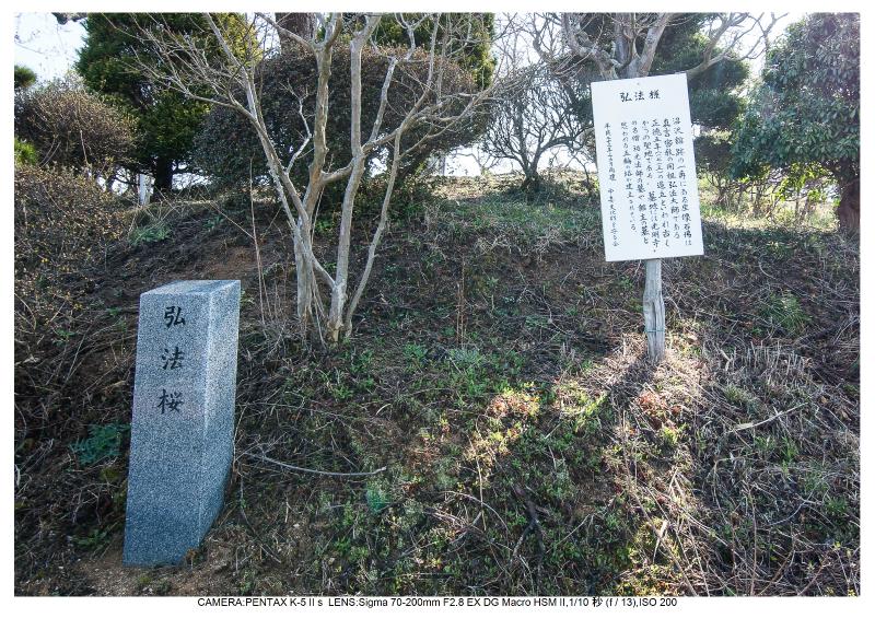 s福島桜8-0弘法桜.jpg