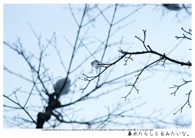 snowmonkey jigokudani114.jpg