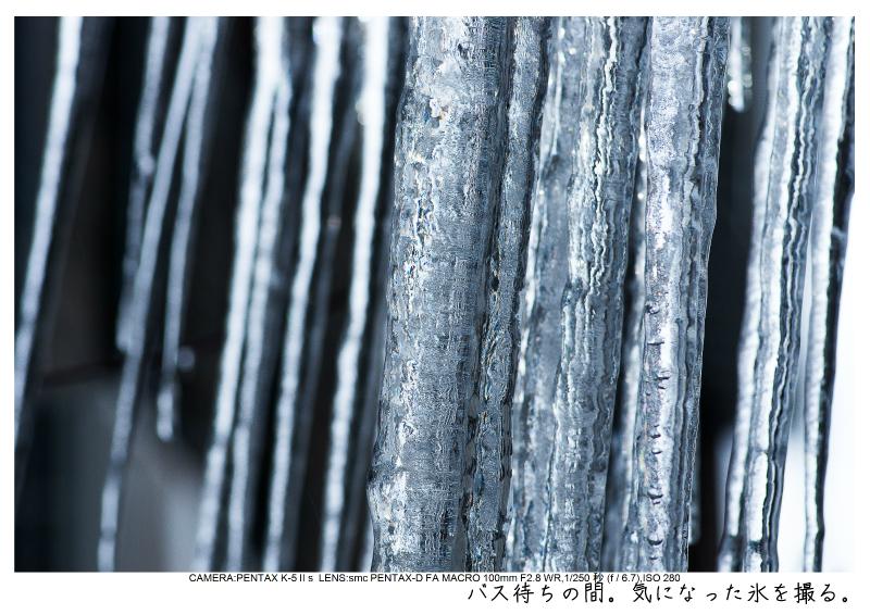 snowmonkey jigokudani120.jpg