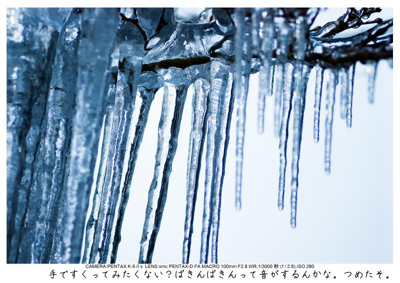snowmonkey jigokudani121.jpg