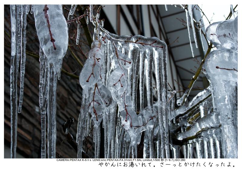 snowmonkey jigokudani123.jpg