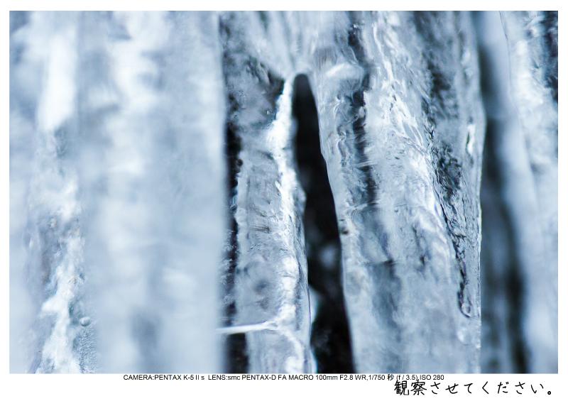 snowmonkey jigokudani125.jpg